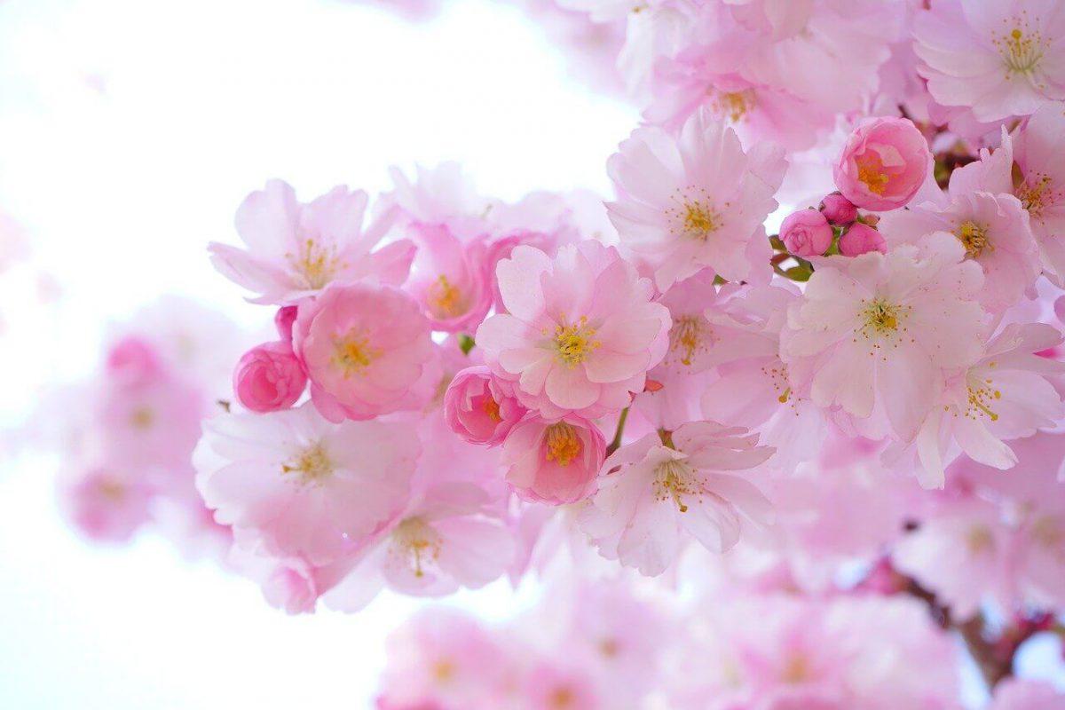 פרחים פתרון לכל אירוע ומאורע