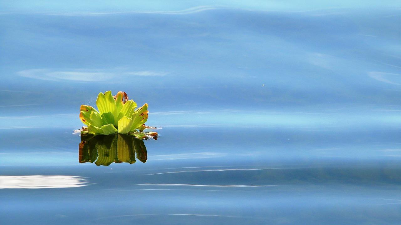 חיטוי מאגרי מים