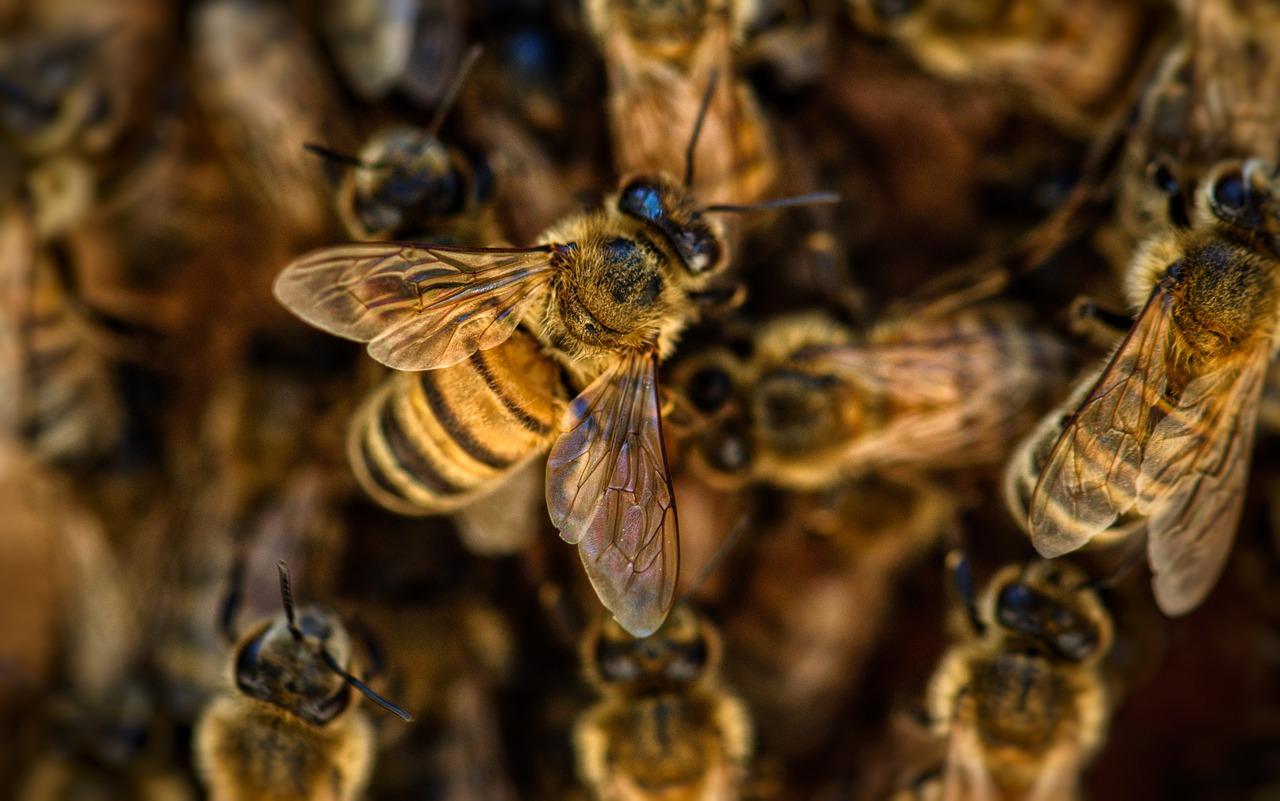 ריסוס לדבורים