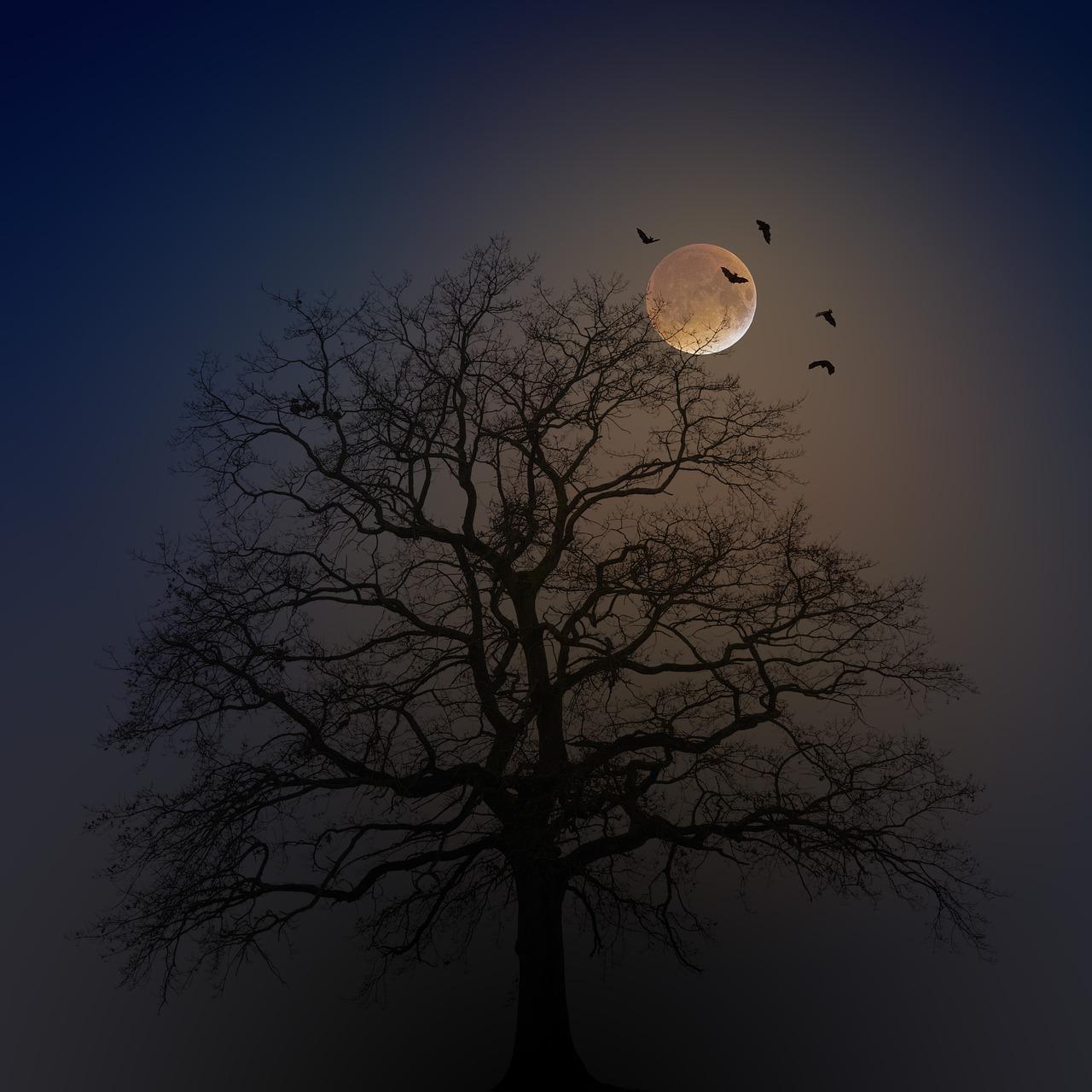 מרחיק עטלפים